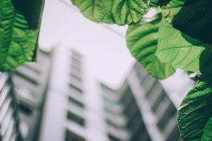 edificio con piante